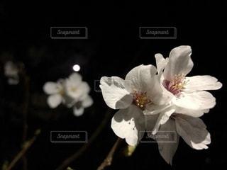 テーブルの上の花の花瓶 - No.1141484