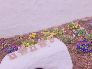 近くの花のアップ - No.1141528