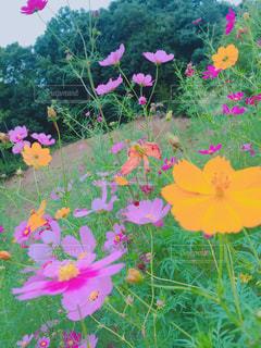 カラフルな花の植物 - No.1141533