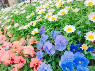 カラフルな花の植物 - No.1141537