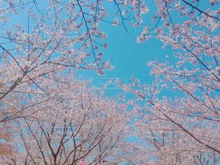 近くの木のアップ - No.1141543