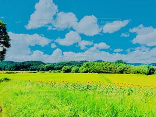 背景の木と大規模なグリーン フィールド - No.1143601