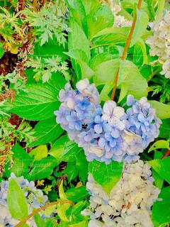 クローズ アップ庭園の緑の植物の - No.1143602