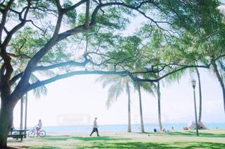 ハワイの写真・画像素材[924917]