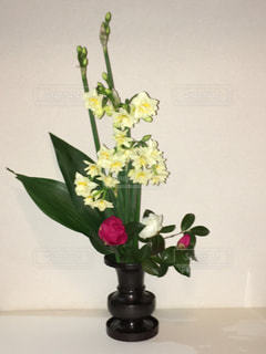 花,屋内,緑,白,水仙,ミックス,山茶花,葉蘭