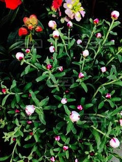 植物の赤い花の写真・画像素材[1054754]