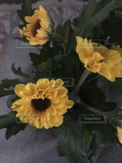テーブルの上の花の写真・画像素材[1054774]
