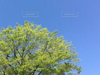 近くの木のアップの写真・画像素材[1118653]