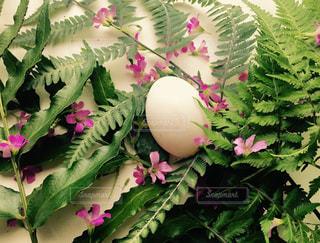 近くの植物のアップの写真・画像素材[1187454]