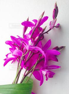 花束の写真・画像素材[1367800]