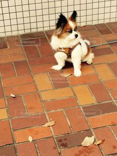 犬,動物,白,茶色,葉,床,タイル,ベージュ,お散歩,哺乳類,ライフスタイル,日中,フォトジェニック,焦げ茶色,タイル張り,配置,私の生活