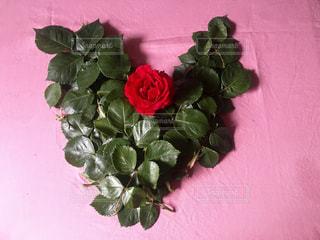 花,緑,葉,薔薇,ハート,明るい,ライフスタイル,フォトジェニック,インスタ映え,配置,多色,私の生活