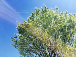自然,空,木,屋外,青空,散歩,樹木,ツリー,レジャー,お散歩,ライフスタイル,おでかけ,私の生活,見沼天然温泉
