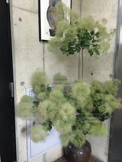 窓の横の花瓶の写真・画像素材[2279864]