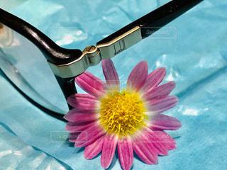 花,フラワー,眼鏡,メガネ
