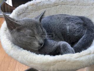 猫,動物,屋内,景色,ペット,寝る,子猫,人物,ライフスタイル,日中,ネコ,配置,ネコ科の動物