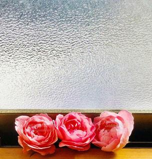 窓辺の薔薇の写真・画像素材[2982069]