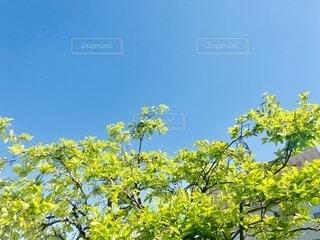 木のクローズアップの写真・画像素材[4408002]