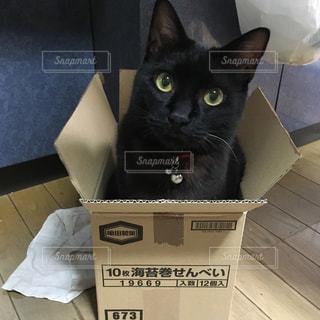 ボックスに座って黒い猫の写真・画像素材[1255975]