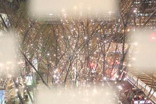 夜,夜景,屋外,樹木,イルミネーション,ライトアップ,明るい,四角,前ボケ,夜散歩,シャンパンゴールド