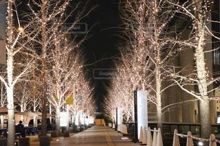 空,冬,夜,夜景,木,屋外,綺麗,樹木,イルミネーション,ライトアップ,道,明るい,一本道,街路樹,シャンパンゴールド