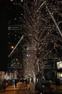 冬,夜,夜景,屋外,散歩,街,樹木,イルミネーション,都会,ライトアップ,人,照明,駅前,明るい,散歩道,通り,街路樹,景観