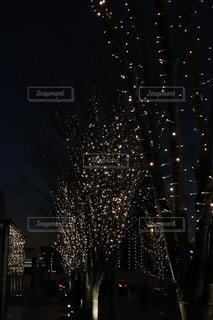 冬,夜,屋外,ライト,樹木,イルミネーション,ライトアップ,景観
