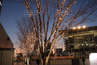空,建物,冬,夜,夜空,ビル,屋外,散歩,建築物,樹木,イルミネーション,都会,ライトアップ,照明,明るい,帰り道,グラテーション,シャンパンゴールド
