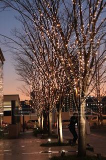 空,木,屋外,夕焼け,夕暮れ,花火,樹木,イルミネーション,明るい,グラデーション,街路樹,草木,シャンパンゴールド