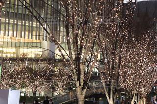 夜景,木,ライト,光,樹木,イルミネーション,ライトアップ,明るい,帰り道,夜散歩