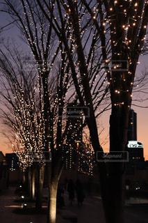 空,冬,夜,夜景,ビル,木,屋外,樹木,イルミネーション,ライトアップ,明るい,通り,街路樹,景観,草木,シャンパンゴールド