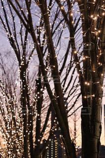 空,冬,夜景,屋外,夕焼け,夕暮れ,散歩,樹木,イルミネーション,ライトアップ,明るい,デート,景観,イマソラ,夜散歩,シャンパンゴールド