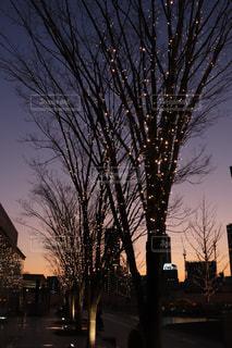 空,木,屋外,夕焼け,夕暮れ,道路,樹木,イルミネーション,ライトアップ,道,明るい,通り,草木,シャンパンゴールド