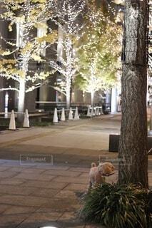 女性,犬,風景,空,冬,カメラ,ビル,屋外,大阪,カラフル,夕焼け,夕暮れ,散歩,アート,都市,撮影,プレゼント,手持ち,樹木,イルミネーション,ライトアップ,人,クリスマス,梅田,装飾,ニット,グランフロント,ビル群,12月,三脚,クリスマスイルミネーション,白ニット,人間の顔