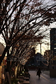 空,冬,ビル,屋外,カラフル,夕焼け,夕暮れ,アート,都市,手持ち,樹木,イルミネーション,ライトアップ,人,クリスマス,オブジェ,サンセット,ビル群,12月,クリスマスイルミネーション,持株