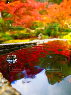 紅葉,京都,庭園,実相院