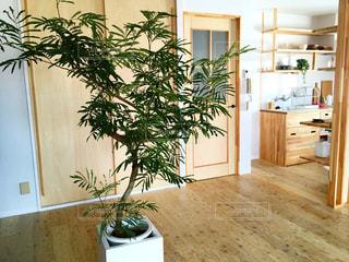 マイホーム,観葉植物,お家,HOME