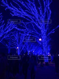夜,屋外,紫,暗い,光,イルミネーション,人,青の洞窟