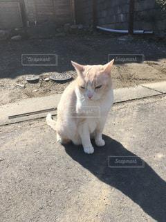歩道の上に座ってオレンジと白猫の写真・画像素材[1002682]
