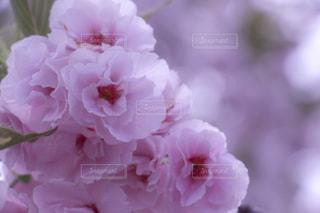 近くの花のアップの写真・画像素材[1135632]