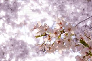 近くの花のアップの写真・画像素材[1135637]