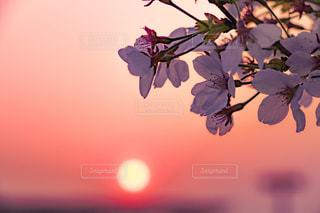 近くの花のアップの写真・画像素材[1135639]