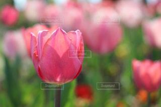 近くの花のアップの写真・画像素材[1135641]