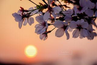 近くの花のアップの写真・画像素材[1135645]