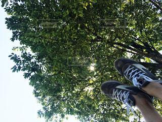 木の下で足を上げるの写真・画像素材[1180773]