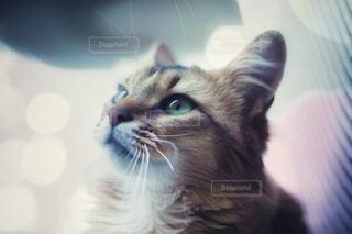 見上げる猫の写真・画像素材[1277513]