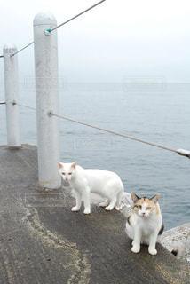 野良猫の写真・画像素材[1277329]