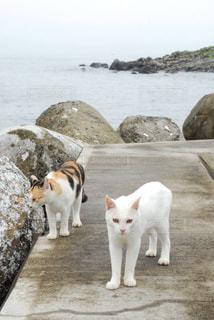 野良猫の写真・画像素材[1277330]