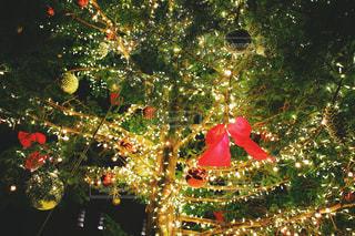 冬,森林,樹木,クリスマス,大きな木,クリスマスツリー,冬の空,Christmas,christmastree