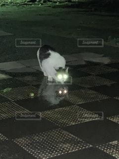 水を飲むエイリアン。。。猫の写真・画像素材[2245534]